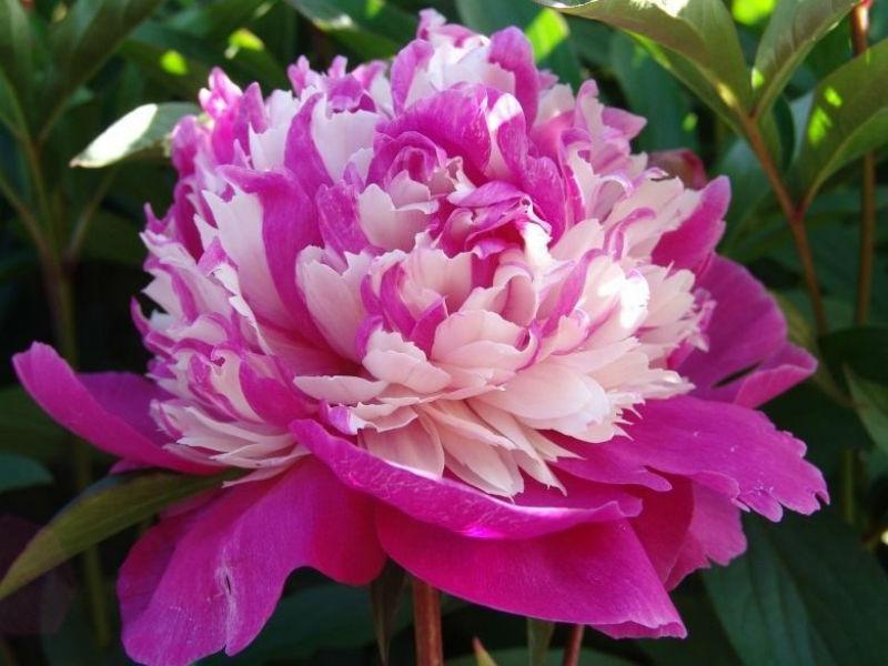 celebrity photo цветы № 123729