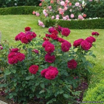 Роза Дарси Бассел~ Rosa Darcey Bussell11